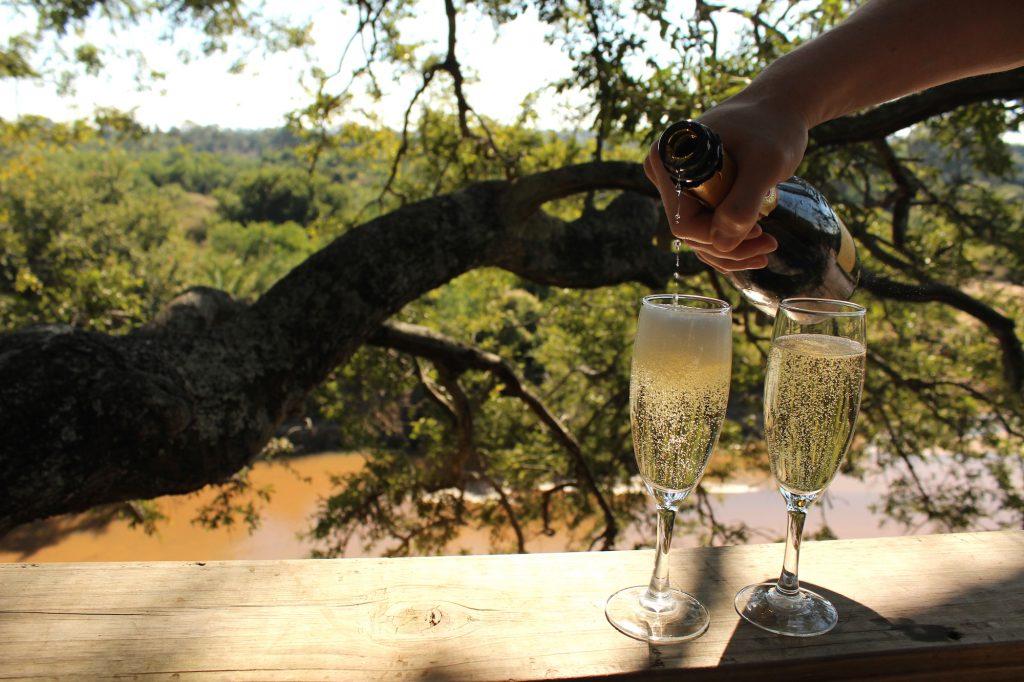 safari champagne