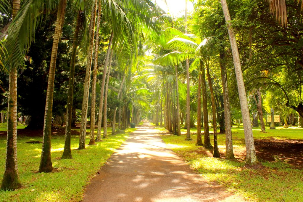 Mauritius Botanical Gardens