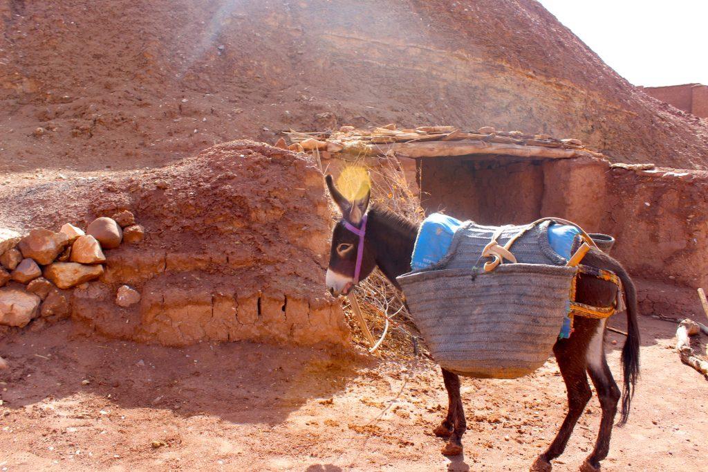 A donkey in Ait-Ben-Haddou