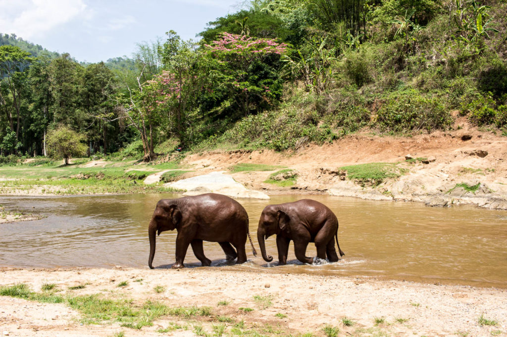 Elephants bathing to cool down at ENP