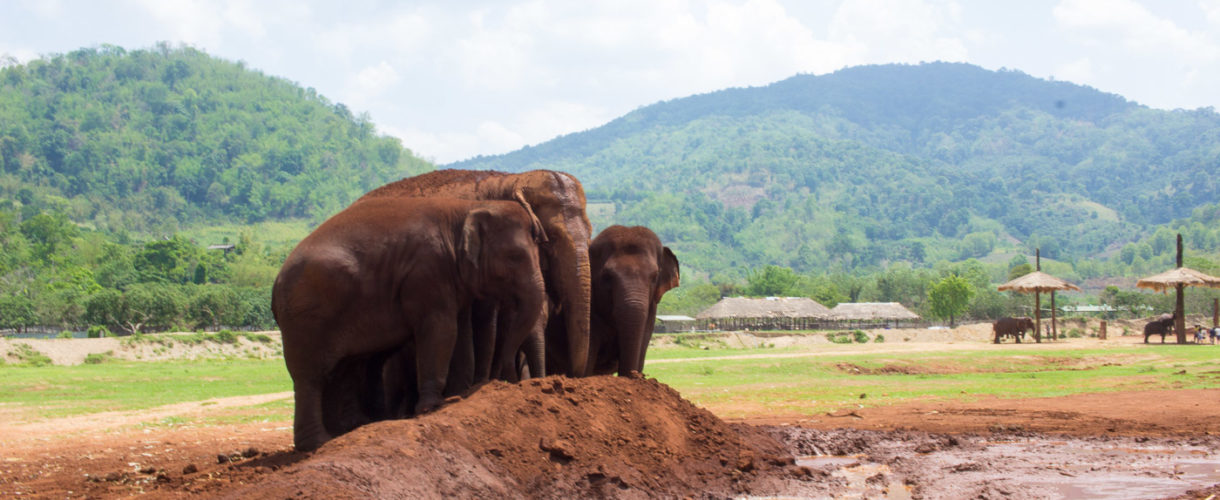 What to Expect at a visit to Elephant Nature Park