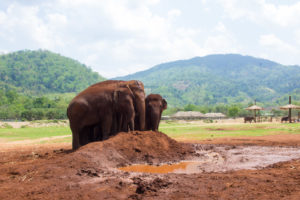 Happy elephants at ENP