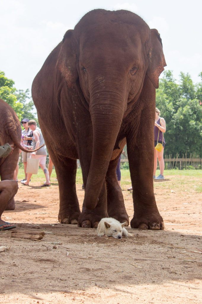 Elephant and dog friends at ENP