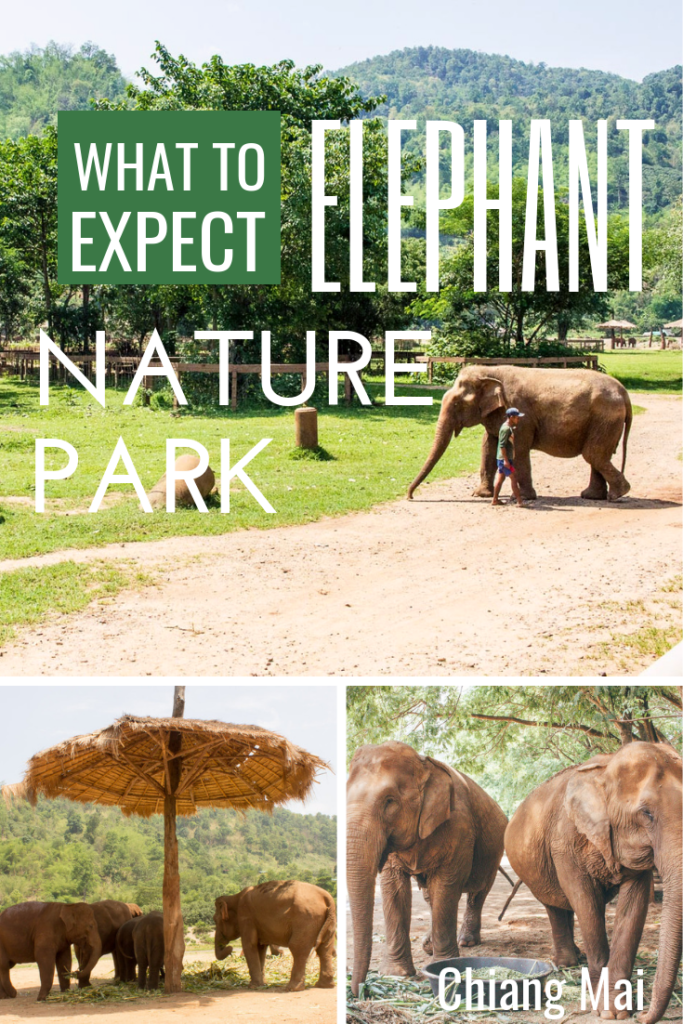 What to Expect at Elephant Nature Park - Thailand's most ethical elephant park